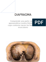 DIAFRAGMA 2017