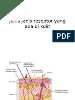 Jenis jenis reseptor yang ada di  kulit.pptx