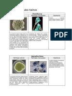 micologia.pdf