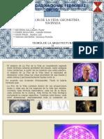 La Flor de La Vida- Geometria s.