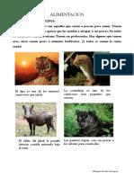 actividades de los animales.pdf