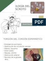 patologiadelescroto-121105231616-phpapp02