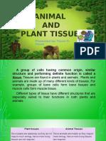 Plant & Animal Tissue