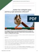 ¿Cuánto Cuestan Los Colegios Para Perros y Qué Servicios Ofrecen_ - 4Patas.com