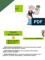 3. músculo