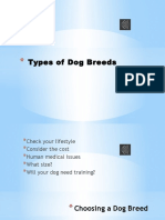 Types of Dog Breeds