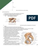 Pelvis and Perineum Lecture Notes