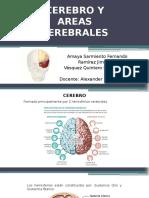 Cerebro y Areas Cerebrales (2)