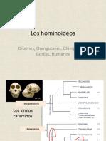 2014-15 13 Evolucion humana_A.pdf