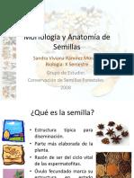 Morfologia y Anatomia de Semillas