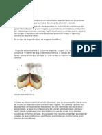 ERUPCIONES volcanicas.docx