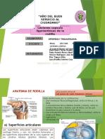 2. 2 Lesiones Capsulo Ligamentosas de La Rodilla
