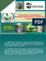 Crisis Agua Bosque Cumbaza