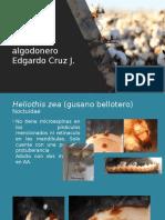 1 Algodonero Practica 1 y 2 (2)