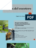 Cocotero Mango Nogal Vid Cítricos Nopal Agave y Plátano