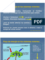 2. Flujo de materia y energia, componentes de la vida.pdf