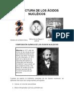 Estructura de Los Ácidos Nucléicos
