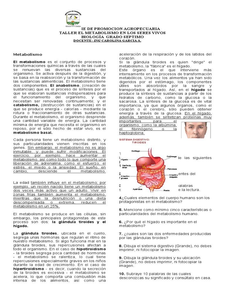METABOLISMO EN LOS SERES VIVOS 7° - Metabolismo - Tiroides