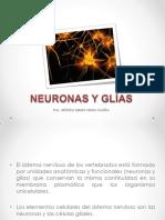 3. Neuroanatomía de La Neurona y Glías