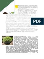 Fotosíntesis Es El Proceso de Elaboración de Los Alimentos Por Parte de Las Plantas