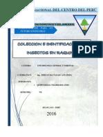 Colecta Entomologica Raquina Huancayo