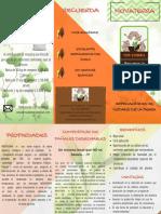 folleto publicitario