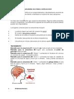 Enfermedades de Sistema Cardiovascular