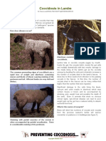 Coccidosis in Lambs