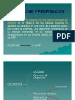 6. Glucolisis y Respiración 1