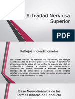 Actividad Nerviosa Superior