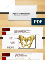 anatomia pelvis femenina