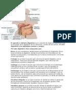 El Aparato o Sistema Digestivo Es El Conjunto de Órganos y Glándulas Que Se Encargan de La Digestión de Los Alimentos
