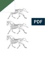 Esqueleto de Equino