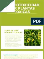Hepatotoxicidad Por Plantas Toxicas