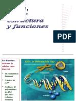 b. Dogma Central y Sintesis de Proteinas1