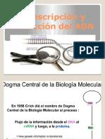 2 Transcripcion y Traduccion Del ADN