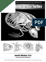 Anatomia de Las Tortugas de Oceano