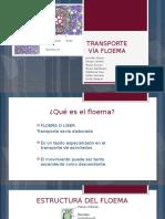 Transporte via Floema