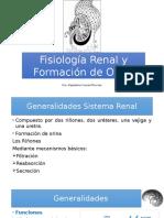 Fisiología Renal y Formación de Orina