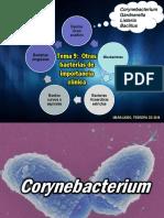 Tema 9 Coryne Listeria Bacillus.pdf
