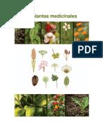 50.Plantas.Medicinales
