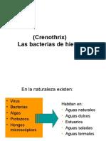 Clase de Crenothrix