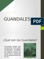 GUANDALES (1)