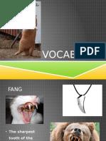 Vocabulary animal parts.pptx
