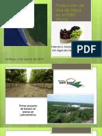 286 Produccion de Uva de Mesa en Peru Piura Fortalezas Debilidades y Futuro