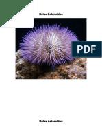Kelas Echinoidea