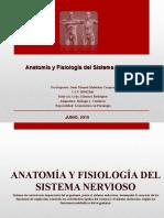 anatomiasistemanervioso-