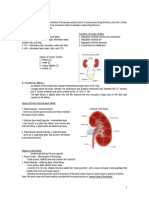 the urinary system.doc