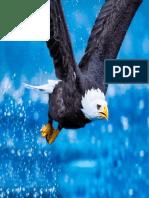 águia pdf