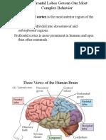 33_frontalcortex